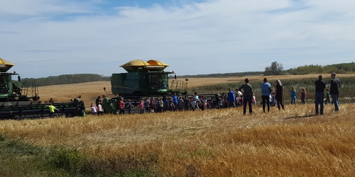 Churchbridge:- CPS students get to experience harvest first hand